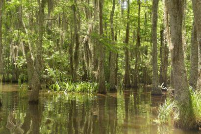 3_2016.8.Tag-Swamp3