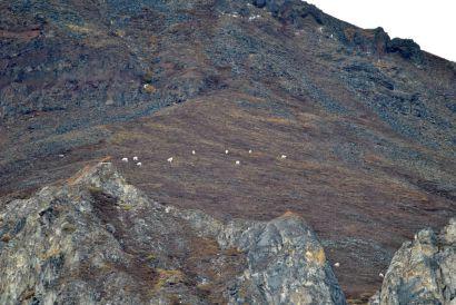 16_Tag_Sheeps1